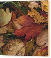 The Color Of Fall Wood Print