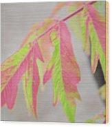 The Colors Of Shumac 2 Wood Print
