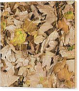 The Colors Of The Leaves In Autumn Wood Print