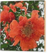 The Colour Orange Wood Print