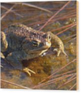 The Common Toad 1 Wood Print