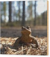 The Common Toad 3 Wood Print