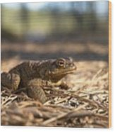 The Common Toad 4 Wood Print