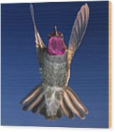 The Conductor Of Hummer Air Orchestra Wood Print