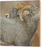 The Conquest - Bighorn Sheep Wood Print