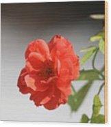 The Coral Rose Wood Print