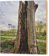 The Cottonwood Wood Print
