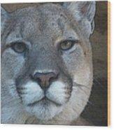 The Cougar 3 Wood Print