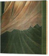 The Countess Wood Print