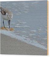 The Curious Little Sanderling 1 Wood Print