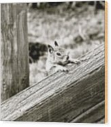 The Curious Squirrel Wood Print