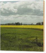 The Curve Of A Mustard Crop Wood Print