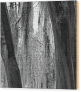 Cypress In The Bayou Wood Print