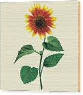 The Dancing Sunflower Wood Print