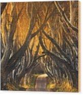 The Dark Hedges IIi Wood Print by Pawel Klarecki