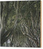 The Dark Hedges V Wood Print