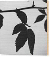 The Darkest Leaf Wood Print