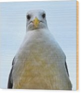 The Disapproving Seagull Wood Print
