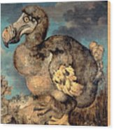 The Dodo, 1651  Wood Print