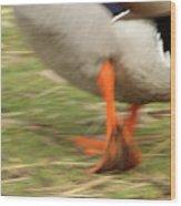 The Duck Strut Wood Print