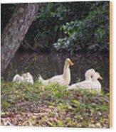 The Ducks Wood Print