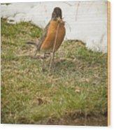 The Early Bird - Robin - Casper Wyoming Wood Print