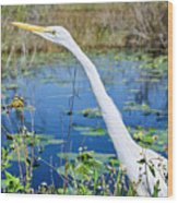 The Egret And The Dragonfly Wood Print