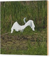 The Egret Has Landed Wood Print