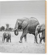 The Elephant Family Wood Print