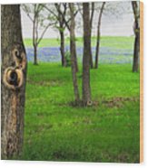 The Enchanted Forest Wood Print