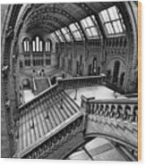 The Escher View Wood Print by Martin Williams