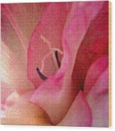 The Essence Of A Gladiola Wood Print