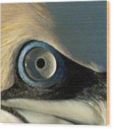 The Eye Of A Northern Gannet Wood Print