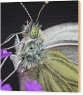 The Eye Of The Green-veined Butterfly. Wood Print