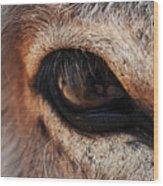 The Eye Of A Burro Wood Print