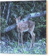 The Fawn II Wood Print