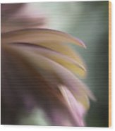 The Feathery Kisses In My Dreams Wood Print
