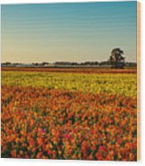 The Field Of Flowers Wood Print