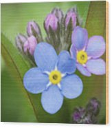 The First Blossom Of The Forget Me Not Wood Print