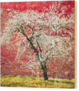 The First Blossoms Wood Print
