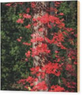 The First Maple Of Autumn Wood Print