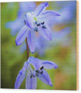 The First Spring Flowers Wood Print