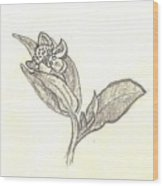 The First Wildflower Of Spring Field Sketch Wood Print