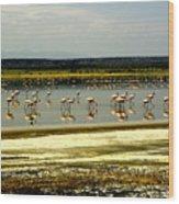 The Flamingoes Wood Print