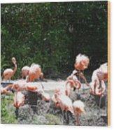 The Flamingos Wood Print