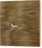 The Floating Feather Wood Print