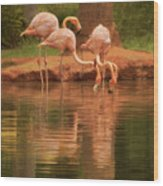 The Flock - The Serenity Of Flamingos At Water's Edge Wood Print