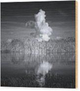 The Florida Everglades Wood Print