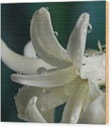 The Flower Of Dews 2 Wood Print