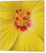 The Flowers Eyes-debbie-may Wood Print